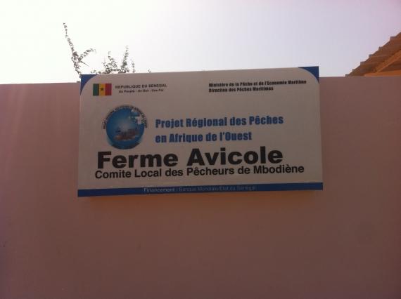 Mbodiène étrenne  une ferme Avicole