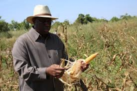 """Pape Abdoulaye Seck souligne la voie à suivre pour """"une agriculture forte"""""""