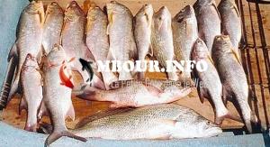 GENRE – Autonomisation des femmes du secteur de la pêche artisanale