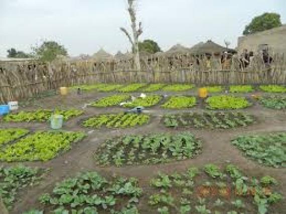 la DG de l'ANRSA veut installer 4 à 5 jardins potagers par village