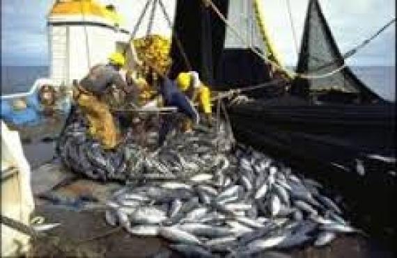 Joal-Fadiouth : Un projet russe de transformation des produits halieutiques divise les populations