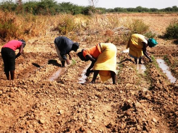 95% des exploitations agricoles sont familiales (expert)