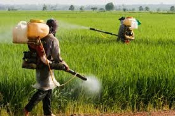 Horticulture-Pesticides : Des acteurs plaident pour une ''utilisation ''raisonnée ''