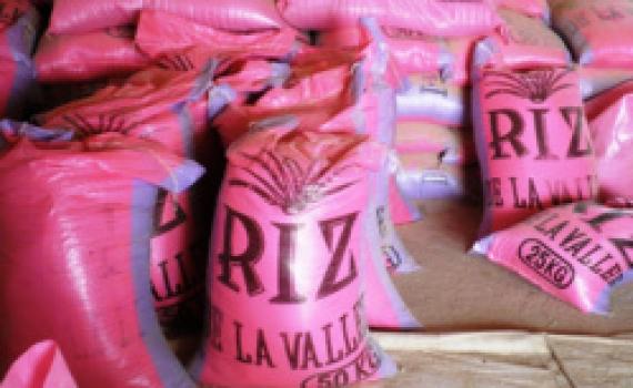 SÉNÉGAL: le kilogramme du riz paddy fixé à 125 FCFA.