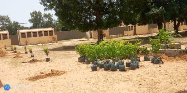Éducation : la génération 83/84 des anciens élèves de l'école 3 revient avec des arbres.