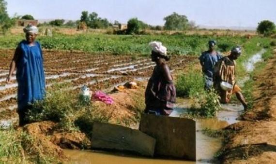 Macoumba Diouf relève les potentialités horticoles du triangle Dakar-Thiès-Mbour