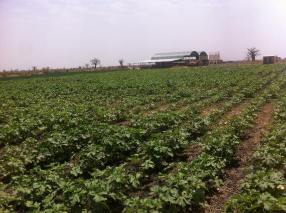 Intensification et développement de l'agriculture : l'Anida, un  jalon vers la révolution agricole.