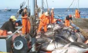 Le nombre de licences de pêche passe de 300 à 400