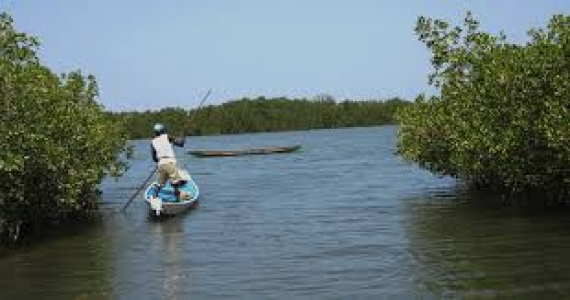 Joal-Fadiouth : la réhabilitation de la mangrove a permis d'enrayer les risques