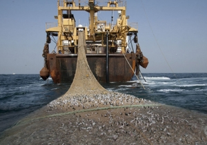 Pêche INN : le Sénégal perd 150 milliards de FCFA par an