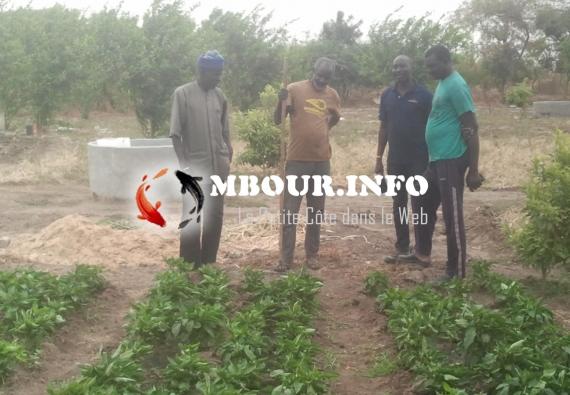 AGRICULTURE : NDIANDA, l'avenir du maraîchage du Sénégal
