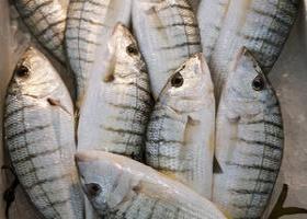 La FAO appelle à une mise en œuvre rigoureuse et effective du traité mondial contre la pêche illégale