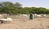 Appui  au pastoralisme au Sahel : Le Sénégal lance son processus de formulation.