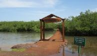 LAGUNE DE LA SOMONE: La régénération de 300 ha de mangrove en vue
