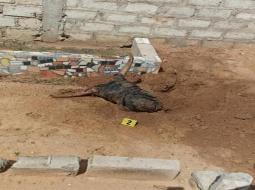 Incroyable mais vrai : la police exhume une tombe aux cimetières de Tefess, et découvre.......