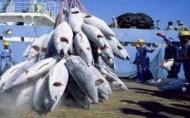 Les industries de pêche peuvent aider à résorber le déficit commercial (ministre)