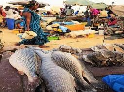 Pêche artisanale et changement climatique : le manque de poissons inquiète les mbourois.