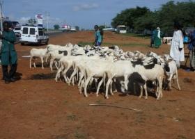 SANDIARA : Les  vendeurs sous la hantise du vol de bétail