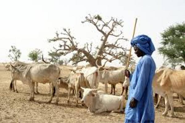 MBOUR – NGUENIENE : Pour préserver leur zone de pâturage menacée par Produmel, les éleveurs de Ballabougou réclament  un ranch.