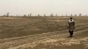 LITIGE FONCIER – NDINGLER : Babacar Ngom déracine les arbres qui servaient de repères aux paysans pour délimiter leurs champs.