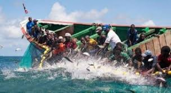 Les acteurs de la pêche alertent les autorités sur la surexploitation des petits pélagiques.