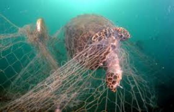 [VIDEO] Birdlife lance la croisade pour protèger les oiseaux de mer et les tortues marines
