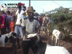 [VIDEO] MBOUR - TABASKI 2018 : Vendeurs de moutons et acheteurs hantés par la même psychose au foirail.