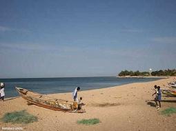 JOURNEE MONDIALE DE LA BIODIVERSITE : le Sénégal à la recherche d'une solution pour la protection de la nature.